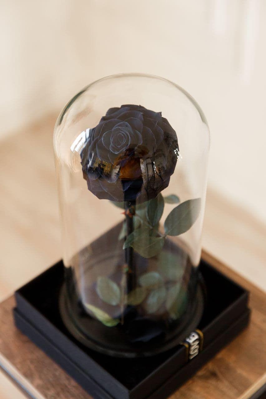 Forever rose black